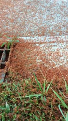 Millions of Tiny Red Crabs Migrate on Christmas Island   www.youmaker.com