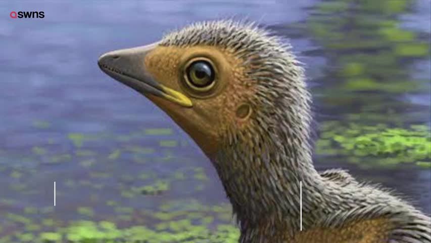 Along With Birds Turtles Crocodile Komodo Dragons And Frogs Have Remained Relatively Unchanged Since The Time Of Dinosaurs Many Scientists