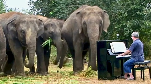 Traumatized Elephants Stop to Listen as Soon as Man Plays Starts Playing for Them