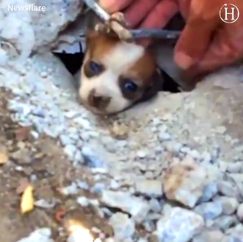Puppy Stuck in Pipe for Three Days, Got the Most Dramatic Rescue