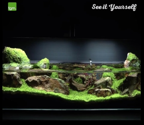 Amazing Aquarium Decorations Leave Viewers Stunned