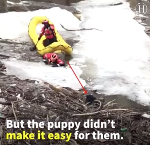 'Oh, Puppers, Come Back!' Video Shows Dramatic Dog Rescue in the Middle of an Icy River
