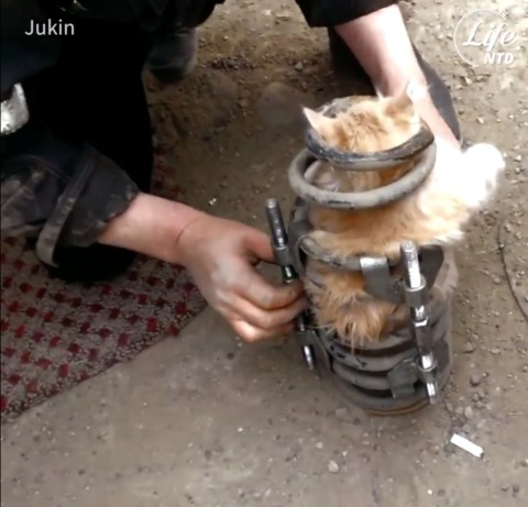 Cat Has Near Death Experience Inside Car Spring