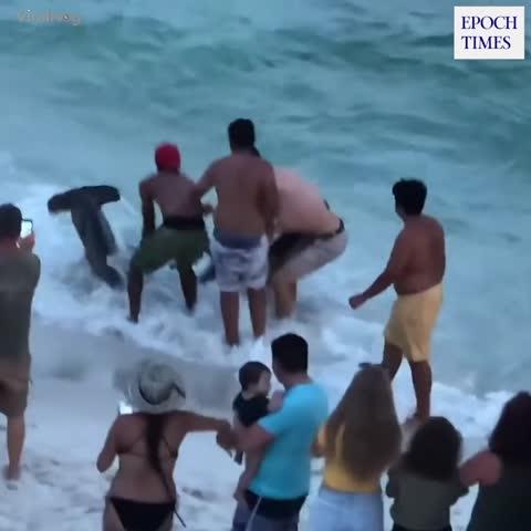 Badegäste befreien gefesselten Hammerhai in Florida